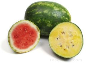 All About Watermelon Article