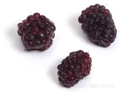 Boysenberry Glossary Term