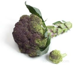 Purple Broccoli Glossary Term
