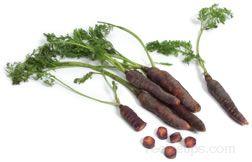 maroon carrot Glossary Term