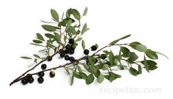 Bush Cherry Glossary Term