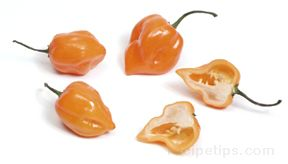 Habanero Chile Pepper Glossary Term