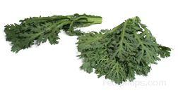 chrysanthemum greens Glossary Term