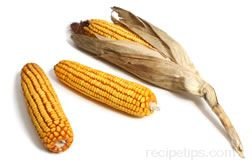 Dent Corn Glossary Term