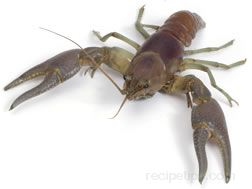 crayfish Glossary Term
