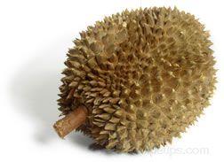 Durian Glossary Term