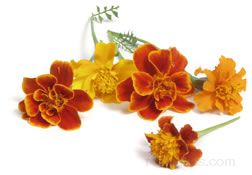 Edible Flowers Glossary Term