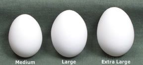Egg Glossary Term