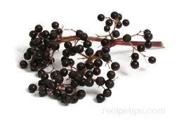 Elderberry Glossary Term