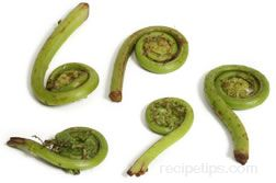 Fiddlehead Glossary Term