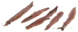 Anchovy Glossary Term
