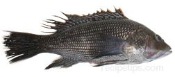 sea bass Glossary Term