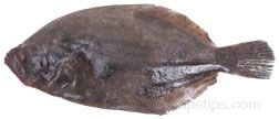 Flatfish Glossary Term