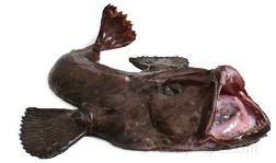 Monkfish Glossary Term