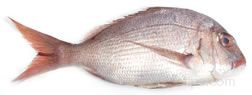 red snapper Glossary Term