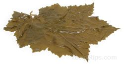 Grape Leaves Glossary Term