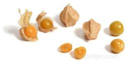 Ground Cherry Glossary Term