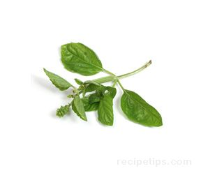 basil Glossary Term