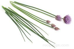Chive Glossary Term