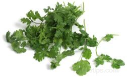 Chinese Parsley Glossary Term