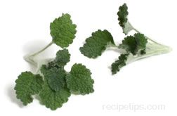 Horehound Glossary Term