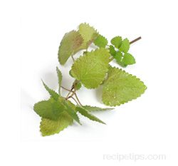 Lemon Balm Glossary Term