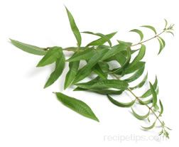 lemon verbena Glossary Term