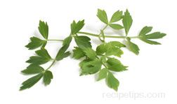 Lovage Glossary Term