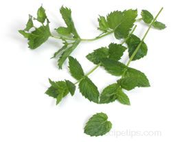 spearmint Glossary Term