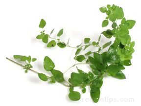 Oregano Glossary Term