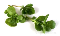 Purslane Glossary Term