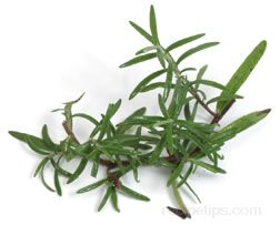 rosemary Glossary Term