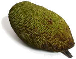Jackfruit Glossary Term