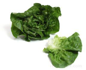 Butterhead Lettuce Glossary Term