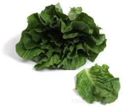 Boston Lettuce Glossary Term