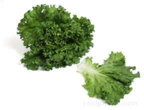 leaf lettuce Glossary Term