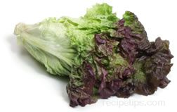 red leaf lettuce Glossary Term