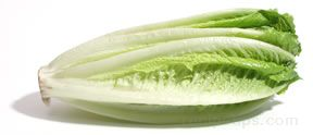 cos lettuce Glossary Term