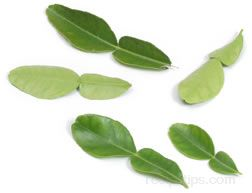 lime leaf Glossary Term