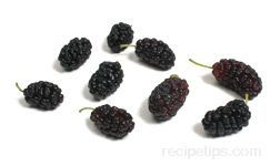Mulberry Glossary Term