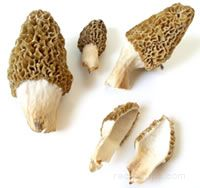 wild mushrooms Glossary Term