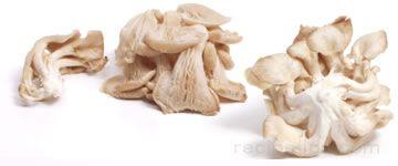 Pleurotte Mushroom Glossary Term