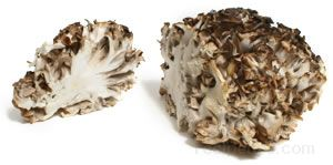 hen of the woods mushroom Glossary Term