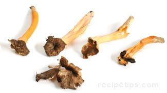 Yellow Foot Mushroom Glossary Term
