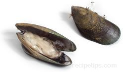 Mussel Glossary Term