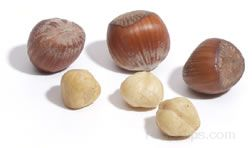 hazelnut Glossary Term