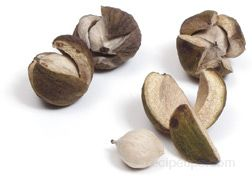 Hickory Nut Glossary Term