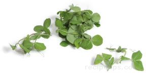 snow pea sprouts Glossary Term