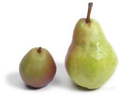 seckel pear Glossary Term