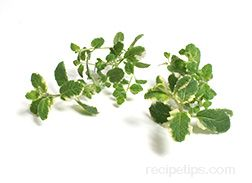 Pineapple Mint Glossary Term